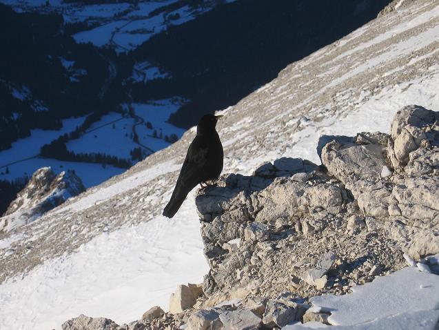 Foto: Andreas Koller / Wander Tour / Dürrenstein - inmitten der Pragser Dolomiten (2839m) / 24.12.2008 13:47:29