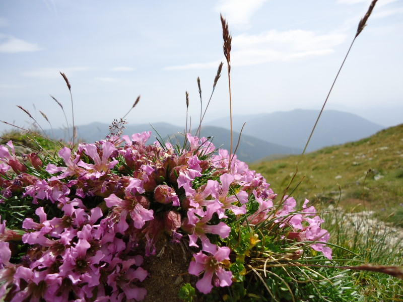 Foto: Günter Siegl / Wandertour / Rosennock - höchste Erhebung der Kärntner Nockberge (2440m) / 10.08.2013 19:58:43