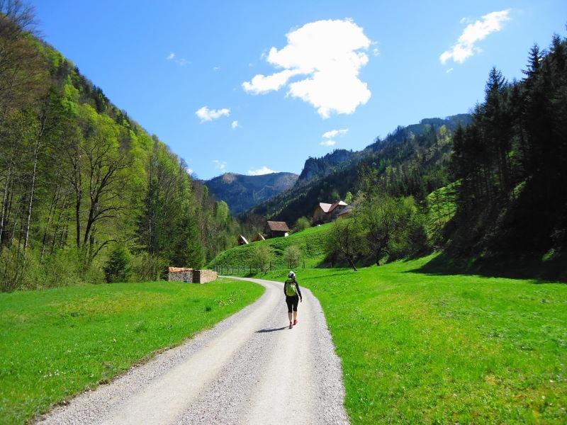 Foto: Günter Siegl / Wandertour / Gschwendtalm und Brunnbacher Gamsstein / Brunnbachtal - alternativer, markierter Weg zur / von der Gschwendtalm  / 26.04.2014 12:58:54
