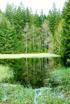 Foto: Wolfgang Dröthandl / Wander Tour / Plöckenstein - Auf Adalbert Stifters Spuren / Kleiner Weiher, bereits auf tschechischem Boden / 28.03.2011 13:46:16
