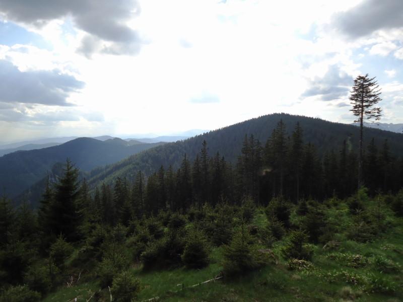 Foto: Günter Siegl / Wandertour / Von Mürzzuschlag über die Kampalpe auf den Semmering / Tratenkogel / 10.06.2015 14:52:32