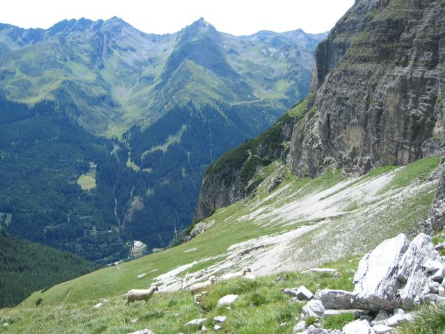 Foto: pepi4813 / Wander Tour / Schwarze Wand - Pflerscher Höhenweg / Pflerscher Höhenweg / 18.07.2009 19:56:02
