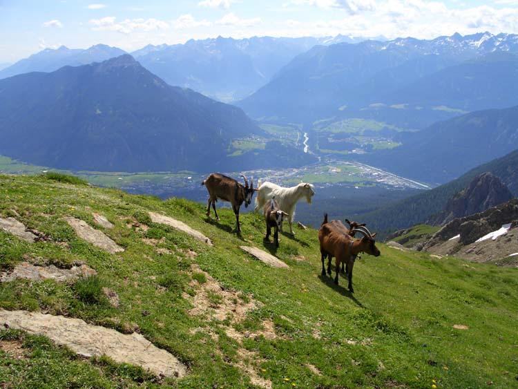 Foto: vince 51 / Wander Tour / Alpjoch - Pleiskopf - Muttekopf / auf dem hinteren Alpjoch mit Blick auf Imst und das Inntal / 14.07.2009 23:50:27