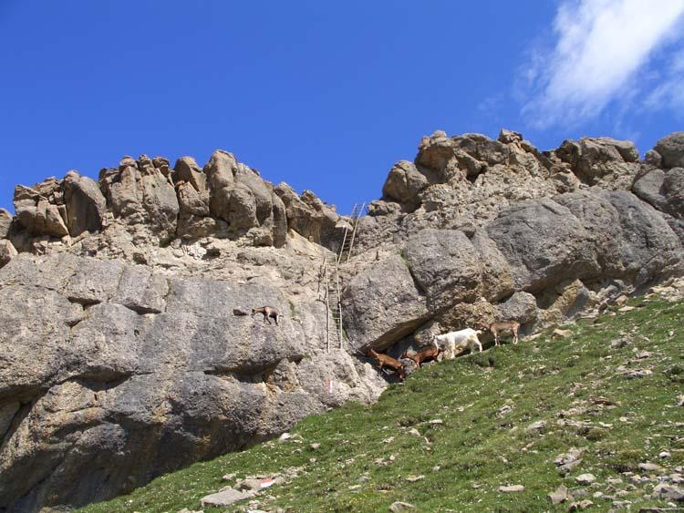 Foto: vince 51 / Wander Tour / Alpjoch - Pleiskopf - Muttekopf / zwischen hinterem Alpjoch und Pleiskopf / 14.07.2009 23:49:32