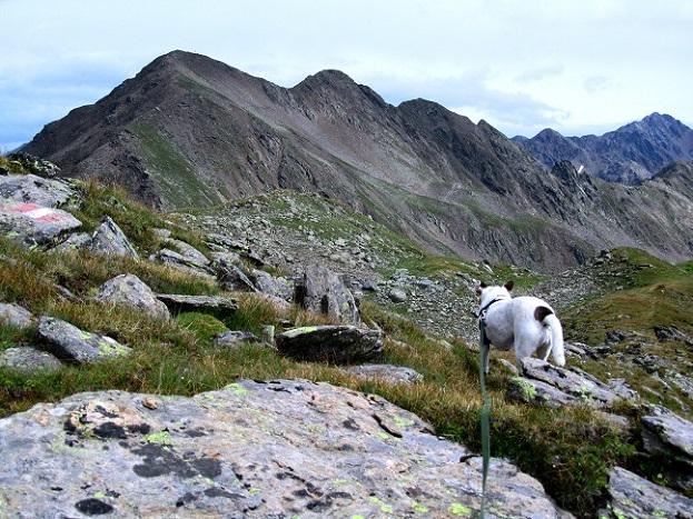 Foto: Andreas Koller / Wander Tour / Von der Volkzeiner Hütte auf die Hochalmspitze (2797m) / 23.04.2014 20:16:00