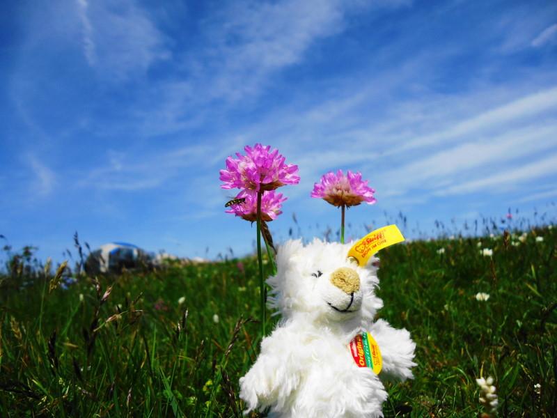 Foto: Günter Siegl / Wander Tour / Von Altenberg an der Rax auf die Schneealpe / Gipfelnickerchen / 17.07.2015 14:51:48