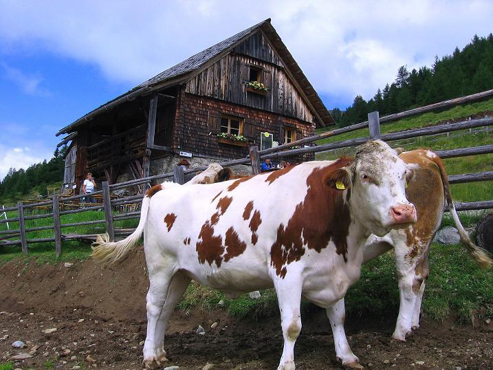 Foto: Andreas Koller / Wander Tour / Vom Prebersee auf das Roteck (2742 m) / Bei der Preberhalterhütte / 16.08.2010 18:45:23