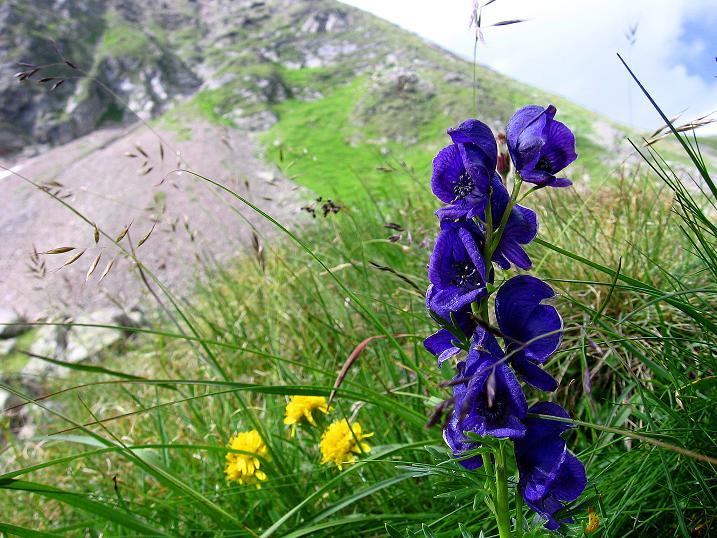 Foto: Andreas Koller / Wander Tour / Vom Prebersee auf das Roteck (2742 m) / 16.08.2010 18:27:44
