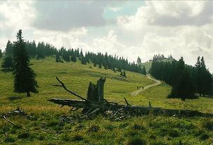 Foto: Wolfgang Dröthandl / Wander Tour / Tirolerkogel - Überschreitung / Abgang vom Annaberger Haus auf dem Höhenweg zum Eibl / 01.02.2011 10:41:25