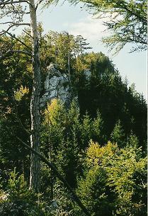 Foto: Wolfgang Dröthandl / Wander Tour / Dürre Wand - Überschreitung / Aufstieg zur Gauermannhütte / 31.01.2011 12:56:20