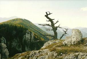 Foto: Wolfgang Dröthandl / Wander Tour / Dürre Wand - Überschreitung / Blick vom Plattenstein nach Südwesten (Dürre Wand) / 31.01.2011 12:55:28