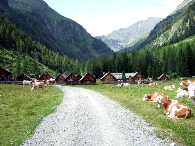 Foto: Ingo Gräber / Wander Tour / Aus dem Göriachtal auf den Hochgolling (2862m) / Die Vorderen Göriachalmen / 05.10.2013 17:25:17