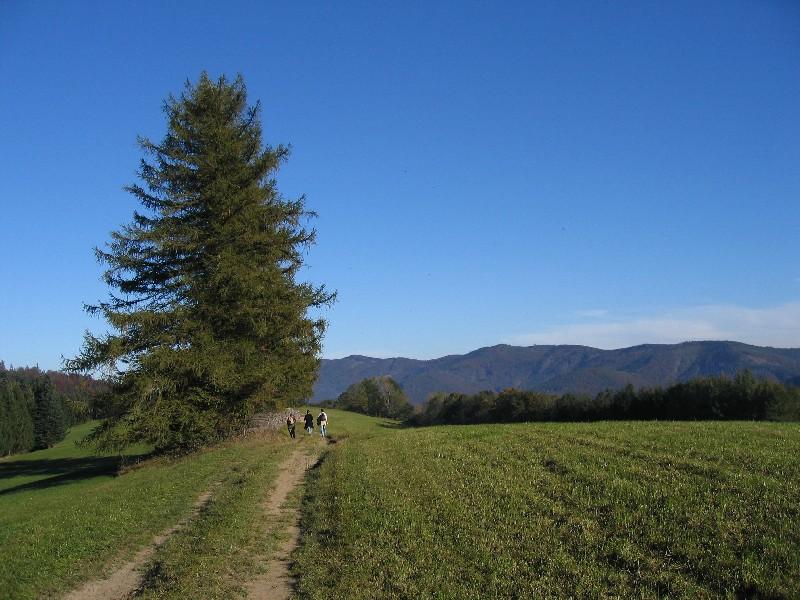 Foto: Climber69 / Wander Tour / Lange Kammwanderung am Schöpfl / Beim Schwarzen Kreuz hat man herr(bst)liche Ausblicke / 26.12.2007 16:52:21