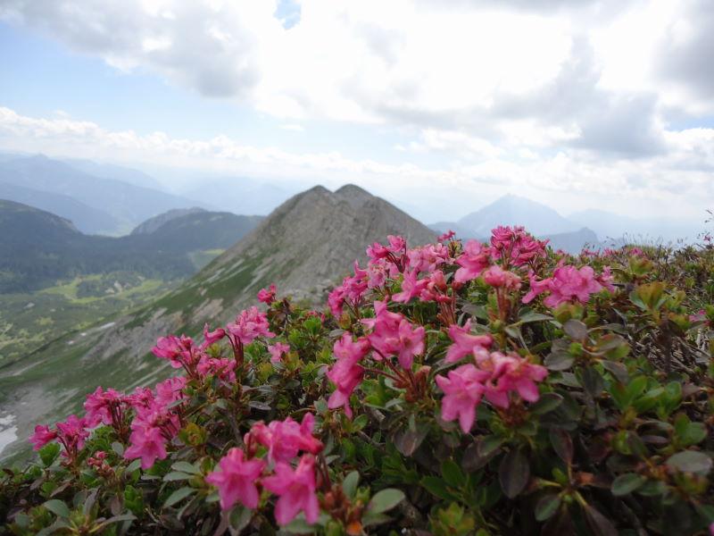 Foto: Günter Siegl / Wander Tour / Gratwanderung über den Hochmölbing zum Schrocken  / 02.08.2013 21:42:19