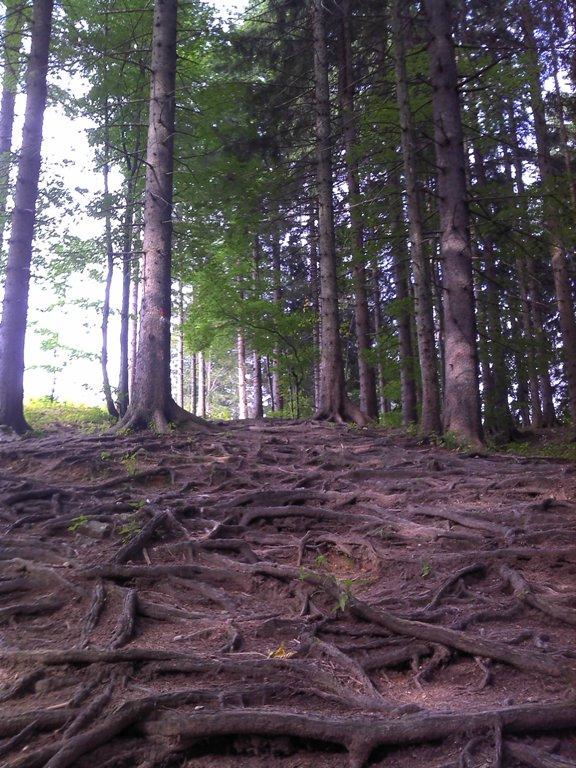 Foto: BiLi / Wander Tour / Über die Ennser Hütte auf den Almkogel / 01.10.2011 14:49:23