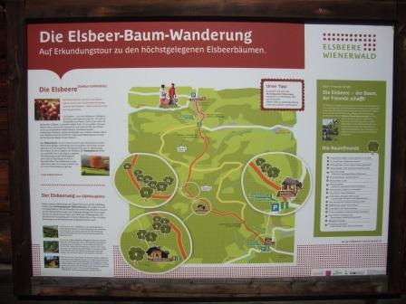 Foto: Wolfgang Dröthandl / Wander Tour / Gföhlberg - zweithöchster Gipfel des Wienerwaldes / Tafel für den Elsbeerweg / 03.04.2017 09:22:34
