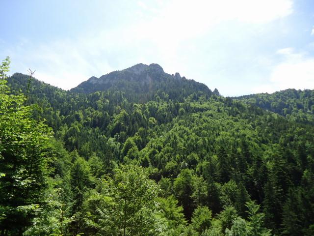 Foto: Günter Siegl / Wander Tour / Von Scharnstein auf den Windhagkogel / Windhagkogel / 07.06.2012 21:29:49
