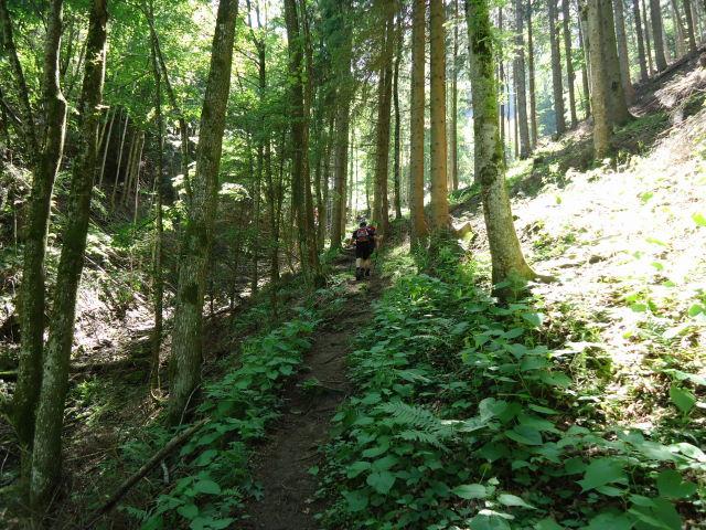 Foto: Günter Siegl / Wander Tour / Von Scharnstein auf den Windhagkogel / 07.06.2012 21:28:58