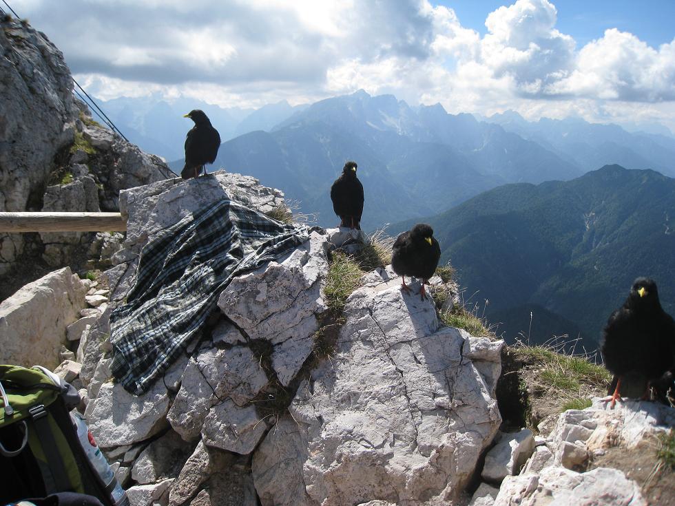 Foto: Martin Liga / Wander Tour / Über die Bertahütte auf den Mittagskogel / Gipfelkreuz Mittagskogel. / 31.08.2008 11:58:18