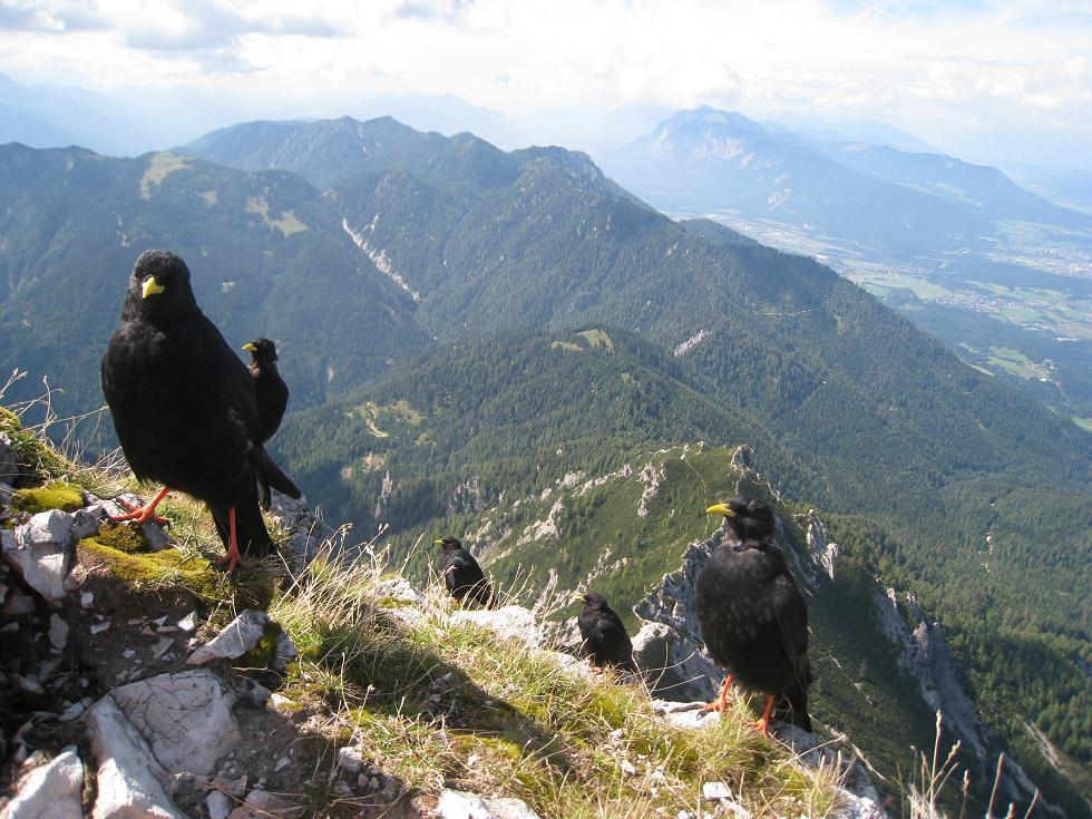 Foto: Martin Liga / Wander Tour / Über die Bertahütte auf den Mittagskogel / Gipfelkreuz Mittagskogel. / 31.08.2008 11:58:26
