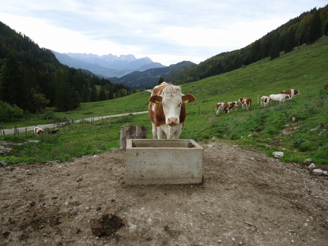 Foto: Günter Siegl / Wandertour / Vom Hengstpass auf den Wasserklotz / 27.09.2012 15:44:28