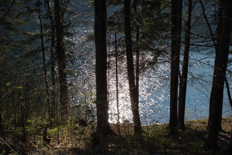 Foto: Günter Siegl / Wander Tour / Vom Franzl im Holz auf den Katzenstein / Bestimmt mit Stimmung am Laudachsee / 24.04.2011 17:32:23