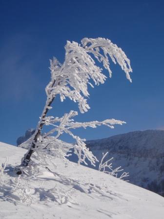 Foto: Johann Seiwald / Ski Tour / Schlenken, 1649m  - vom Rengerberg / 19.12.2008 11:30:03