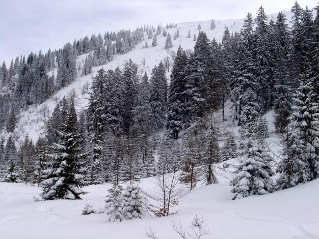 Foto: Manfred Karl / Ski Tour / Königsberghorn, 1621m / Der Aufstieg erfolgt im rechten Teil - etwas außerhalb des Bildrandes / 19.12.2008 17:34:12