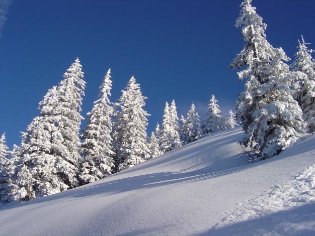 Foto: Manfred Karl / Ski Tour / Königsberghorn, 1621m / 19.12.2008 17:29:20