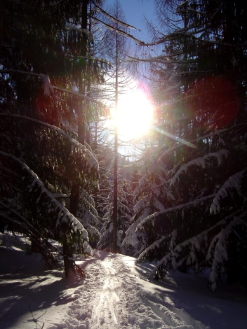 Foto: Manfred Karl / Ski Tour / Königsberghorn, 1621m / 19.12.2008 17:28:15