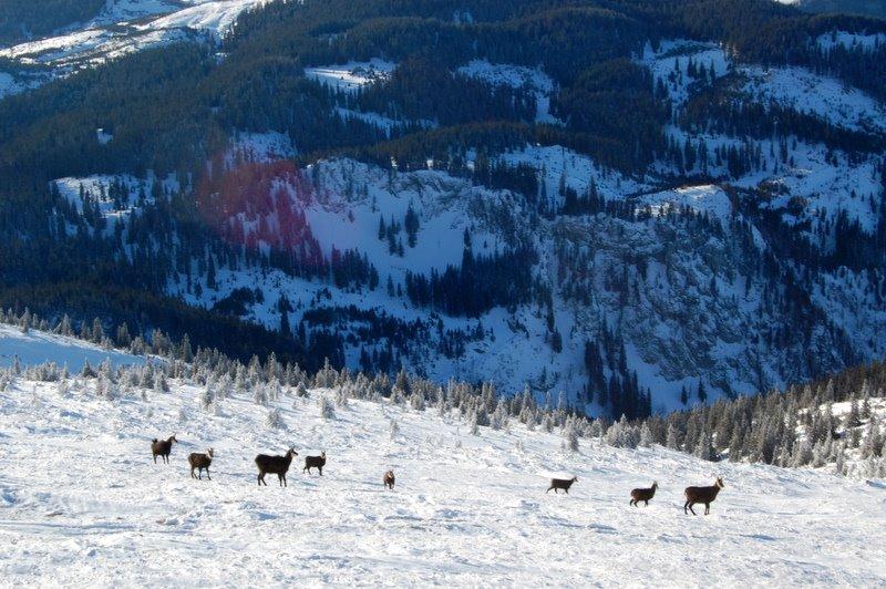 Foto: aschix / Ski Tour / Kaiserstein, 2061m, über den Fadensteig, Abfahrt: Breite Ries (3 Varianten) / 08.04.2011 19:45:26