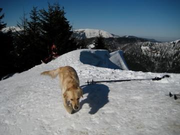 Foto: marko / Skitour / Schwarzkogel, 1535m / 18.02.2008 20:53:39