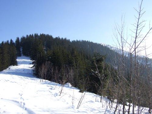 Foto: hofchri / Skitour / Schlenken (über Jägernase) / 08.01.2009 20:26:17