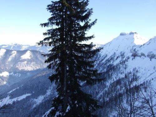 Foto: hofchri / Skitour / Schlenken (über Jägernase) / 08.01.2009 20:26:23