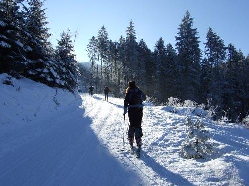 Foto: hofchri / Ski Tour / Loibersbacher Höhe, 1456m / 03.01.2009 19:57:08