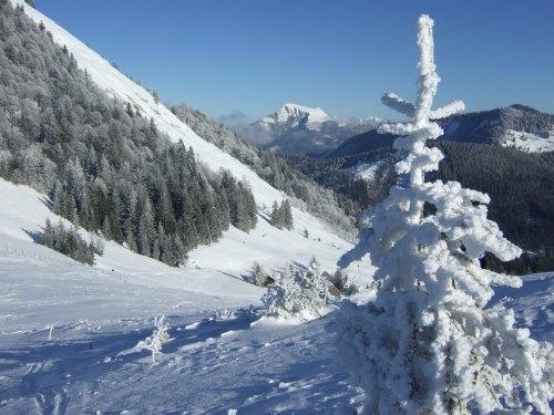 Foto: hofchri / Ski Tour / Loibersbacher Höhe, 1456m / 03.01.2009 19:59:38