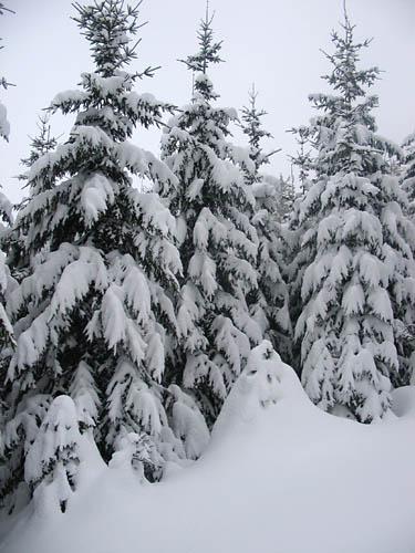 Foto: Lenswork.at / Ch. Streili / Ski Tour / Loibersbacher Höhe, 1456m / 19.11.2007 10:42:26