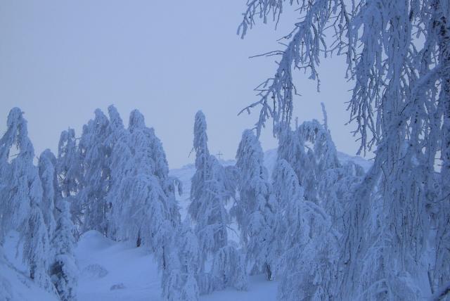 Foto: vbuebi2 / Ski Tour / Stubwieswipfel, 1786m / 29.12.2008 16:41:26