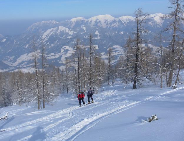 Foto: Wolfgang Lauschensky / Skitour / Wilde, 1719m -  über Wartegg / schütterer Lärchenwald über der Wildalm, im Hintergrund das Sengsengebirge / 14.02.2012 22:09:07