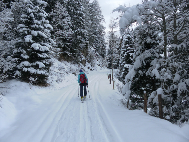 Foto: Wolfgang Lauschensky / Ski Tour / Baumgartgeier, 2392m, und Ronachgeier, 2236m / Waldweg über dem Ronachwirt / 04.02.2014 20:37:31
