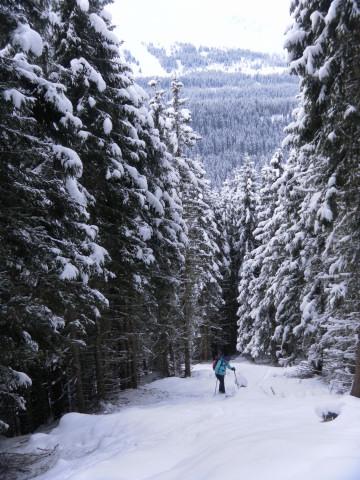 Foto: Wolfgang Lauschensky / Ski Tour / Baumgartgeier, 2392m, und Ronachgeier, 2236m / schmale Waldschneisen am Südhang (Anstieg revers zur Karte) / 04.02.2014 20:37:12
