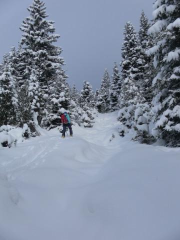 Foto: Wolfgang Lauschensky / Ski Tour / Baumgartgeier, 2392m, und Ronachgeier, 2236m / Winterwald / 04.02.2014 20:37:00