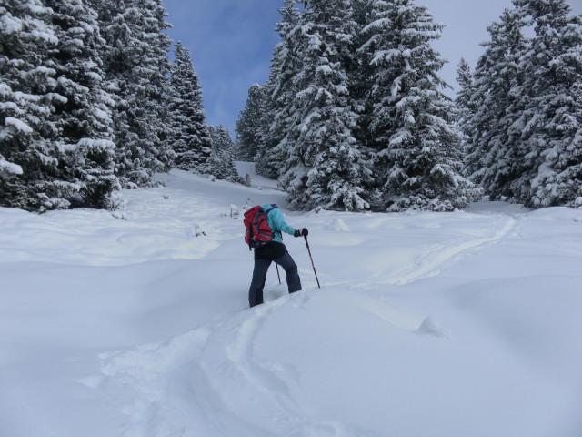 Foto: Wolfgang Lauschensky / Ski Tour / Baumgartgeier, 2392m, und Ronachgeier, 2236m / lockerer Wald vor dem Südrücken / 04.02.2014 20:36:40