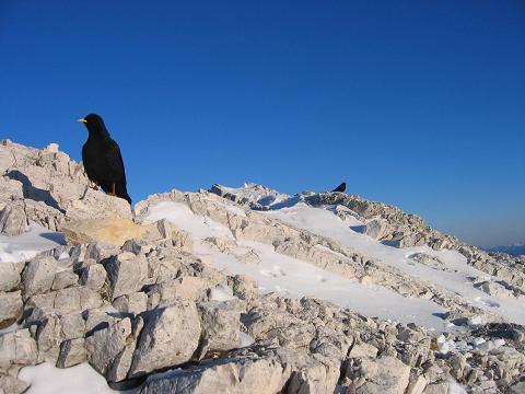 Foto: Andreas Koller / Ski Tour / Dürrenstein, 2839m - von Außerprags / 24.12.2008 13:46:28