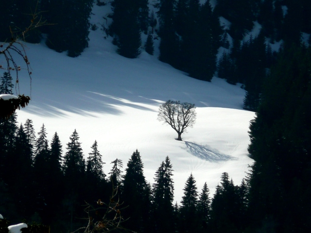 Foto: Manfred Karl / Skitour / Seehorn, 2320m / 27.01.2009 22:06:55