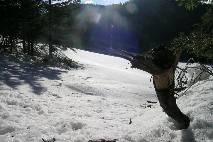 Foto: Andreas Koller / Ski Tour / Tirolerkogel, 1377m / 15.12.2008 00:38:52
