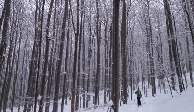 Foto: Martin Reingruber / Ski Tour / Hoher Lindkogel, 834m / Dann gehts länger durch den Wald, meist flach. / 23.02.2013 20:01:43