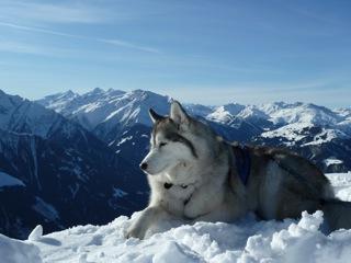 Foto: Thomas Höllwarth / Ski Tour / Hochfeld, 2350m / 19.01.2012 15:13:13