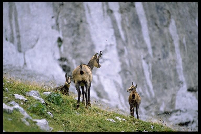 Foto: Elisabeth Sock / Skitour / Winkelkar, ca. 1570 m / 22.10.2008 13:50:14