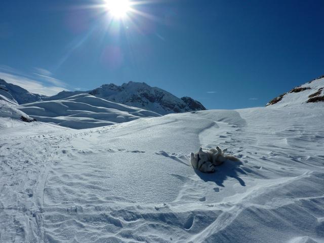 Foto: Thomas Höllwarth / Ski Tour / Mehlsack, 2651m / 29.01.2012 21:05:04